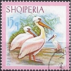 1139.- Albanie, vodní ptactvo,o,