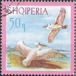 1141.- Albanie, vodní ptactvo,o,