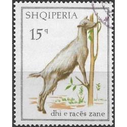 1256.- Albanie, domácí kozy,o,