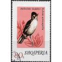 1712.- Albanie-  zpěvné ptactvo,o,