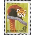 3243.- Panda červená,**,