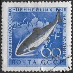 2245- ryby ,o,
