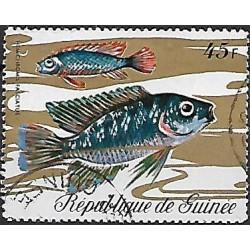 578.- ryby,o,