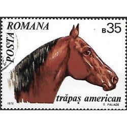2889.- kůň,o,